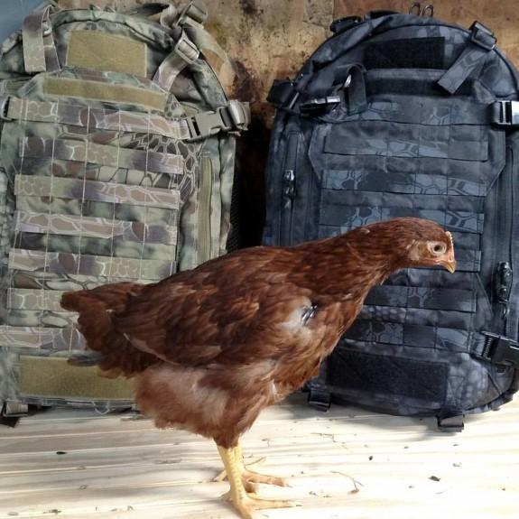 fight and flight llama chicken
