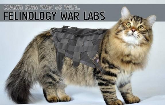felinology war labs